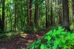 Mange opplevelser i Vadet-skogen