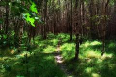 Vedenskogen - vakkert turterreng som blir brukt mye av lokalbefolkningen til aktivitet og rekreasjon.