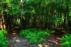 Vakre Vedenskogen byr på et rikt naturliv og mange flotte stier å utforske.